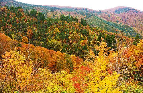 Autumn leaves of Ueyama Highlands