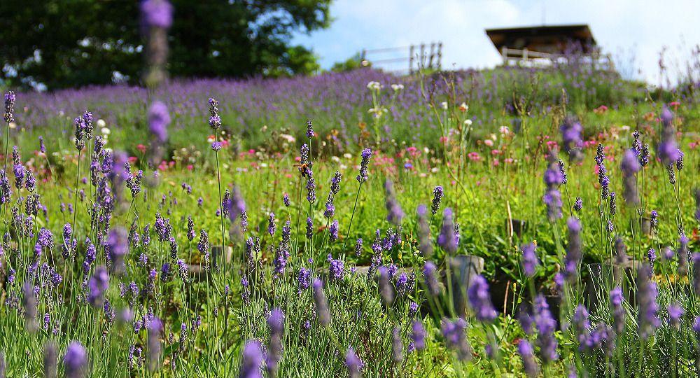 Tajima Pasture Park